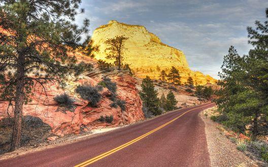 Обои Асфальтная дорога, среди гор и деревьев в Zion National Park