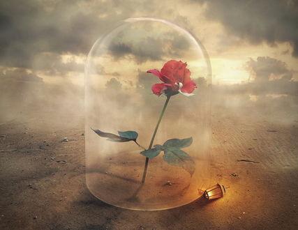 Обои Красная роза, находящаяся в стеклянном, куполообразном сосуде, стоящим на песке на фоне пасмурного неба, рядом лежит декоративный фонарь с горящей внутри свечкой, автор eventiu