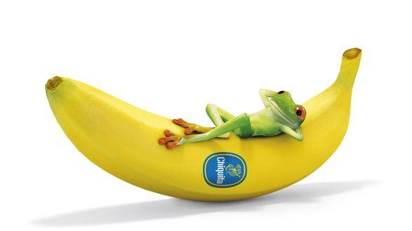 Обои Зеленая лягушка лежит на банане, Chiguita
