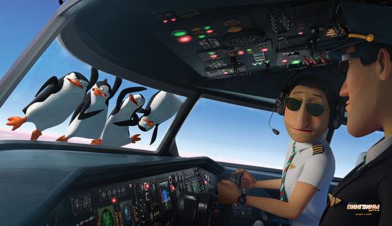 Обои Пингвины на лобовом стекле самолета из мультсериала Пингвины из Мвдагаскара