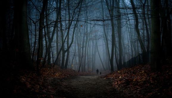 Обои Человек, гуляющий с собакой по грунтовой дороге, усыпанной осенними листьями, проходящей ночью через лесную рощу с синим туманом между деревьями