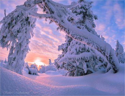 Обои Природа в снегу, работа фантазии природы, фотограф Valtteri Mulkahainen