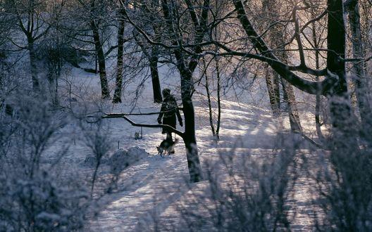 Обои Девушка с собакой гуляет по зимнему лесу