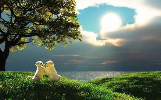Обои Два белых щенка резвятся на зеленой лужайке под деревом, при свете взошедшей полной Луны