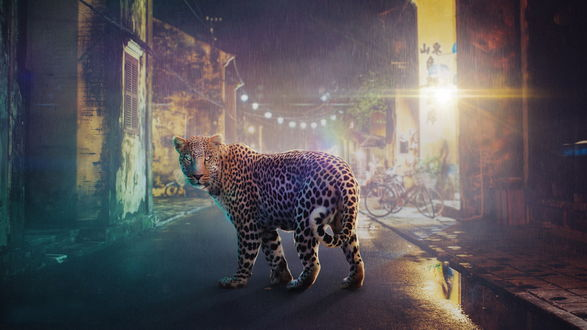 Обои Леопард, идущий под сильным дождем по городской улице ночного города, освещенной электрическими фонарями
