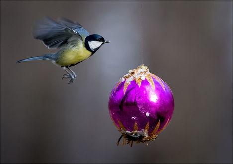 Обои Синица, летящая к елочному шарику в котором отражается зимний пейзаж, автор Сергей Дымченко