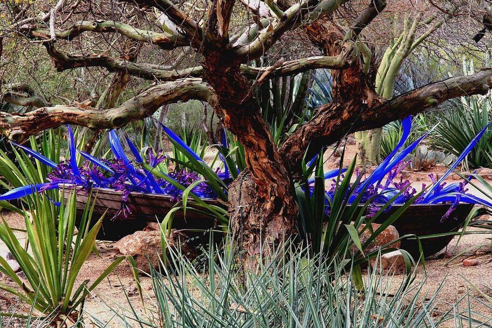 Растения, на которых растут фрукты - Бугага 26