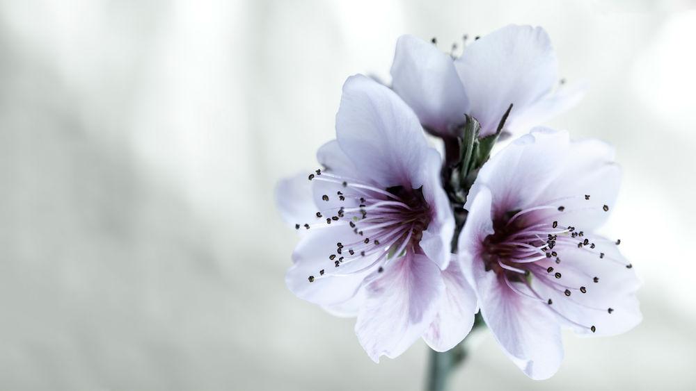 Цветы фото на белом фоне