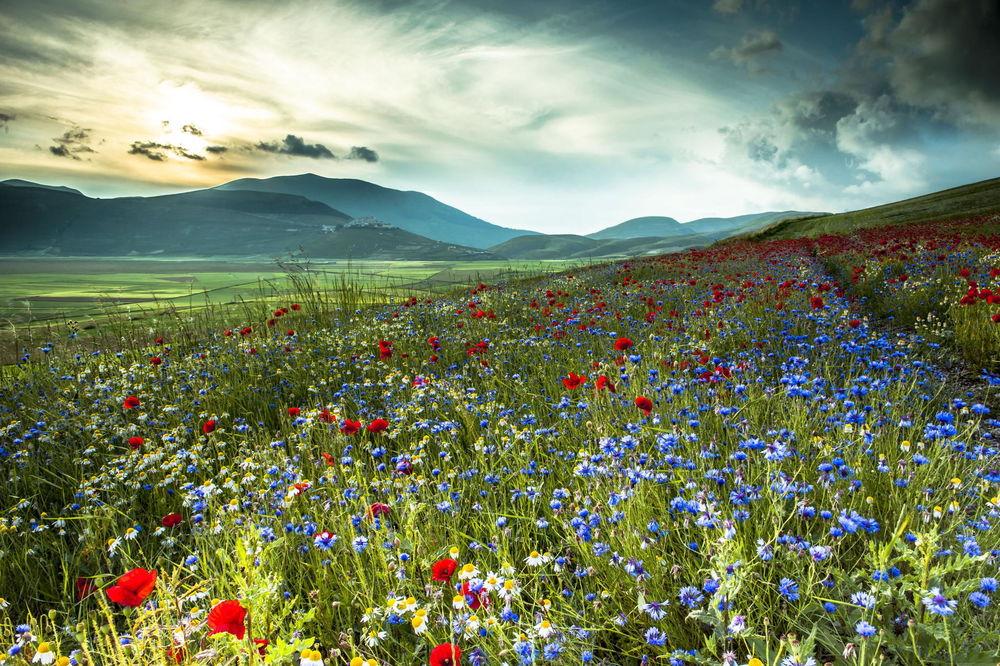 Обои для рабочего стола Цветущая в предгорье поляна с алыми маками, васильками и белыми ромашками на фоне пасмурного неба
