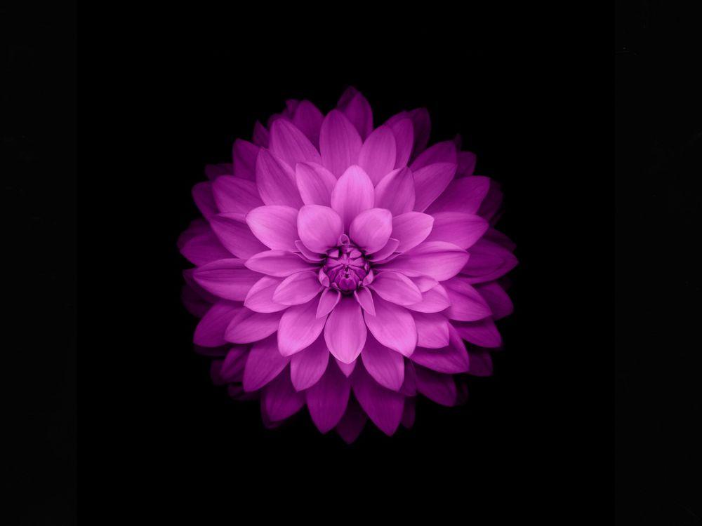 цветы на чёрном фоне картинки