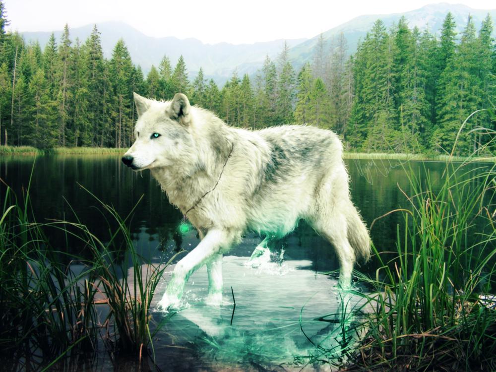 элегантности, стиля картинки волк и горы как сказали восстановила