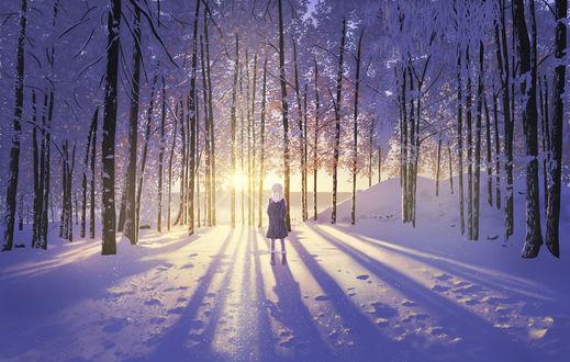 Обои Девушка в зимнем лесу