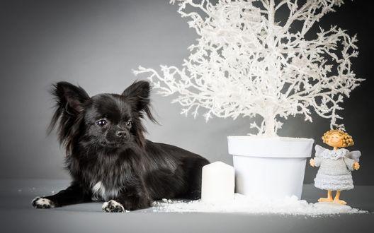Обои Черная лохматая собака лежит рядом с белым деревом, растущим в горшке, рядом стоит игрушечная девочка Ангел и белая свеча, вокруг насыпан белый снег