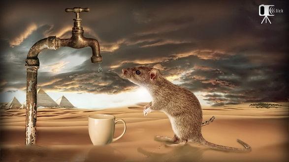 Обои Мышонок, измученный жаждой, стоящий на песчаном бархане пустыни на задних лапках с надеждой смотрит на висящую на конце металлического крана каплю воды со стоящей под краном кружкой, автор 007ranjeet
