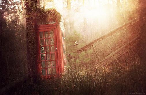 Обои Телефонная будка, стоящая у дерева с заросшей кустами крышей в окружении поваленных стволов сухих деревьев в лесной чащобе, освещенной ослепительными, солнечными лучами, порхающей в воздухе птички, автор Vladim_Shipulin