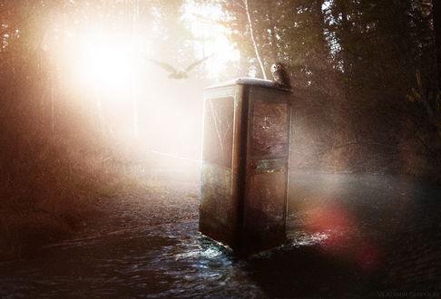 Обои Сломанная телефонная будка с сидящей на крыше совой, стоящая на лесной дороге, освещенной яркими, солнечными лучами, автор Vladim_Shipulin