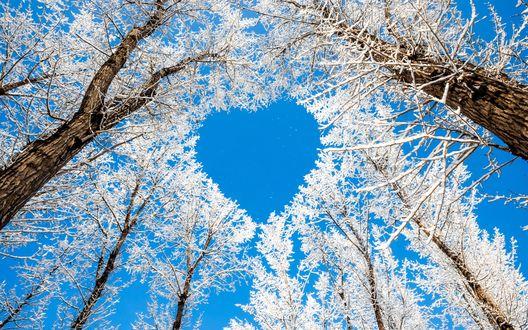 Обои Заснеженные ветки деревьев образовали фигуру в виде сердечка на фоне яркого, голубого безоблачного неба