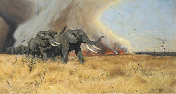 Обои Стадо слонов убегает от вспыхнувшего на траве пожара