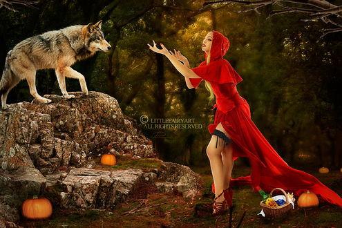 Обои Сексуальная Красная шапочка с принесенной ею плетеной корзинкой с бутылкой вина и прочей закуской, пытается заманить серого волка, стоящего на камне, автор Little Fairy Art