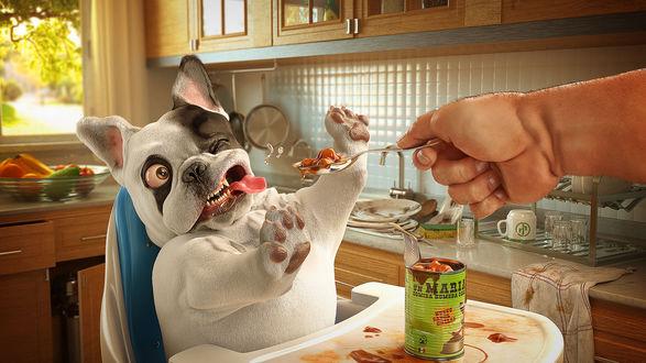 Обои Собака с отвращением отказывается есть протянутые ему собачьи консервы