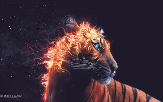 Обои Огненный тигр на темном фоне