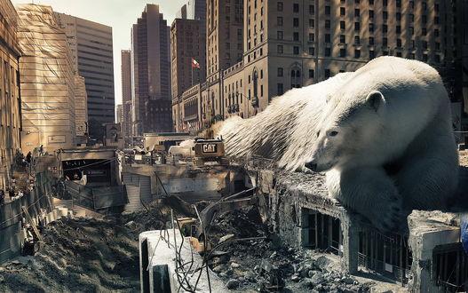 Обои Огромный белый медведь, лежащий на разрушенном, старом здание в котловане, на городской новостройке