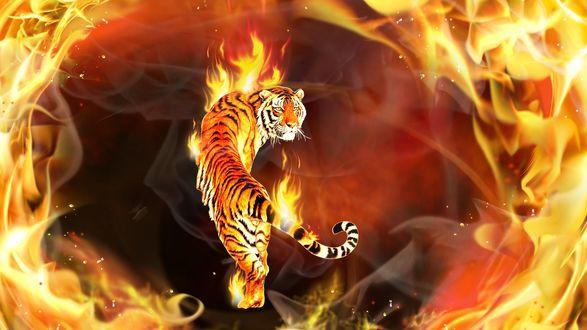 Обои Пылающий тигр среди языков пламени