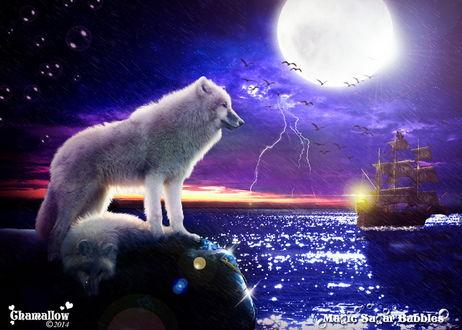 Обои Два белых волка, один из которых лежит, другой стоит на каменном валуне на берегу моря на фоне ярко светящейся луны на ночном небе, ярко сверкающих молний, парящих в воздухе птиц, проливного дождя и плывущего парусника, автор MaGic-SuGar-Rubblec S