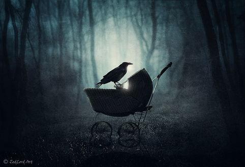 Обои Черная ворона, сидящая на детской коляске на поляне, в сумеречном лесу, автор ZedLord-Art