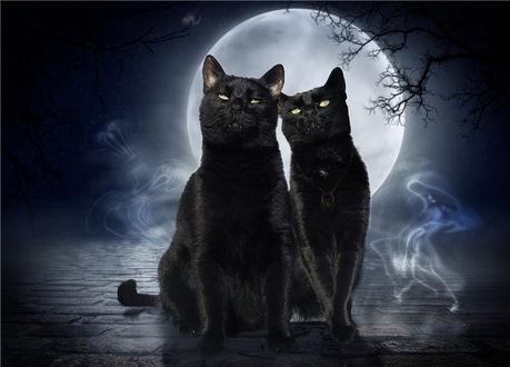 Обои Черные кот и кошка, стоящие на мощеной мостовой на фоне ночного неба и полной луны и белых призраков над дорогой, автор Catjuschka