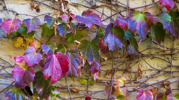 Обои Разноцветные осенние листья хвоща на стене дома