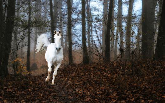 Обои Белый единорог скачет в туманном осеннем лесу