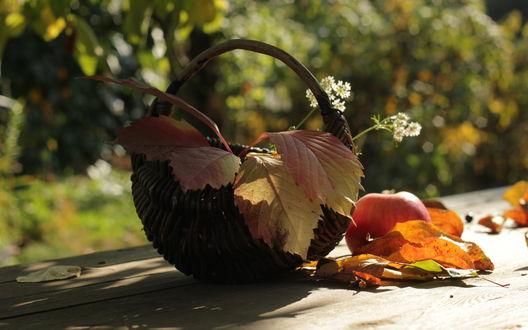 Обои Плетеное лукошко в котором лежат осенние листья и ромашки, стоящее на деревянном столе в саду с лежащим рядом спелым яблоком