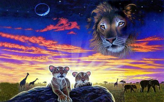 Обои Лев смотрит с неба на маленьких львят лежащих на камнях
