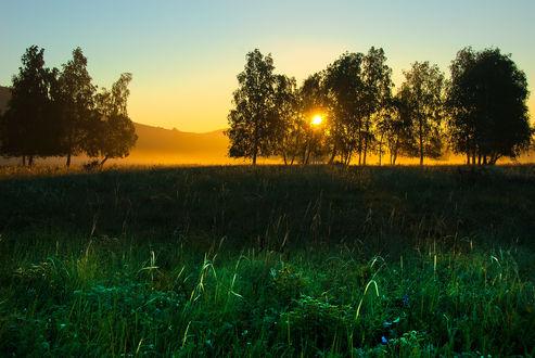 Обои Восходящее из-за гор солнце на утреннем небосклоне осветило через листву деревьев поляну с ярко-зеленой травой и полевыми цветами, автор Михаил Орлов