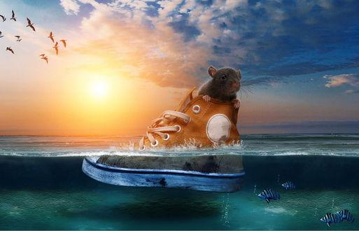 Обои Мышонок, выглядывающий из кеда, плывущего по морю в окружении рыбок на фоне ослепительных, солнечных лучей и парящих в небе птиц, автор genivaldosouza