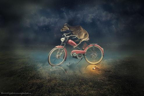 Обои Козел, сидящий на мотовелосипеде, стоящим в воде рядом с камнем на котором лежит фонарь с горящей в нем свечой на фоне ночного, пасмурного небосклона, автор evenliu