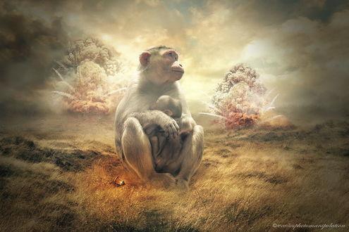 Обои Обезьяна, сидящая на траве рядом с фонарем с горящей в нем свечой, крепко прижимает к себе своего детеныша, стараясь защитить его от взрывов за их спиной, автор evenliu