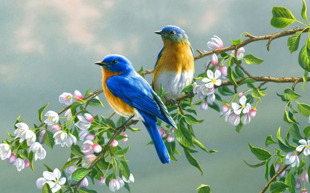 птица цветок  № 2034127 загрузить