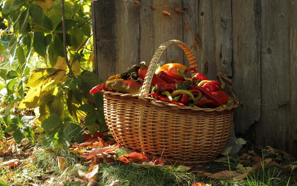 Картинки осень овощи фрукты грибы ягоды