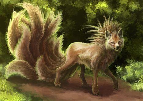 Обои Девятихвостый лис стоит на тропинке в лесу