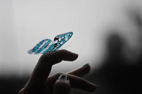 Обои Бабочка сидит на женской руке