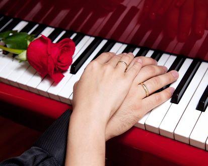 Обои Мужская и женская рука лежат на клавишах пианино, рядом с красной розой