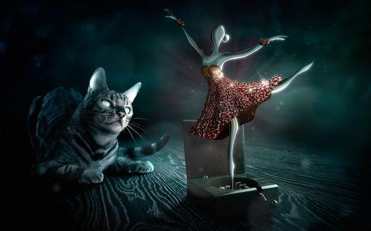 Обои Кот внимательно наблюдает за балериной танцующей из музыкальной шкатулки