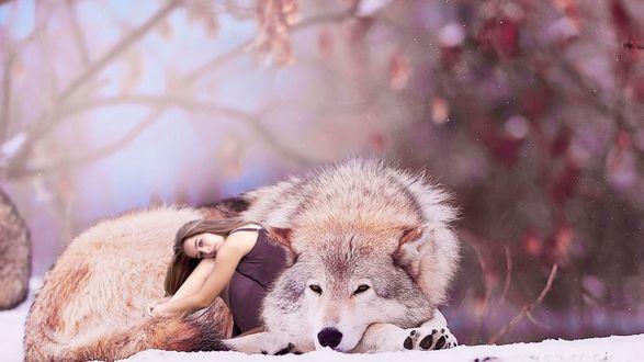 Обои Девушка сидит возле волка, лежащего на снегу