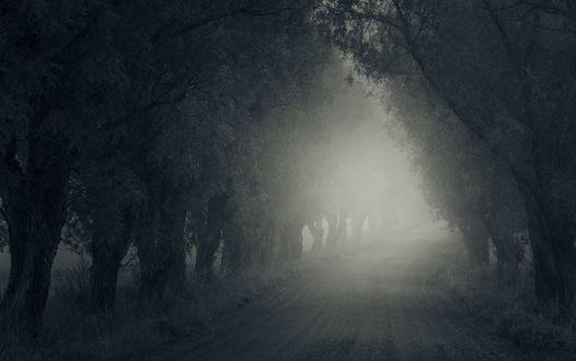Обои Грунтовая дорога с растущими по ее обочинам деревьями, уходящая в туманную мглу