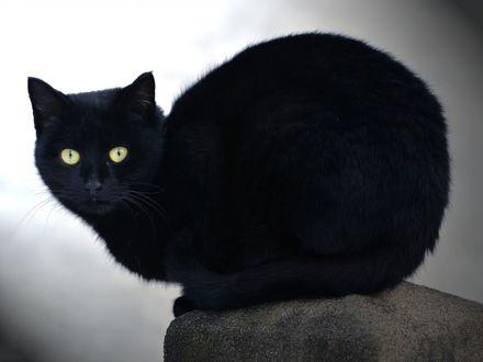 Обои Черный кот сидит на камне и смотрит в камеру