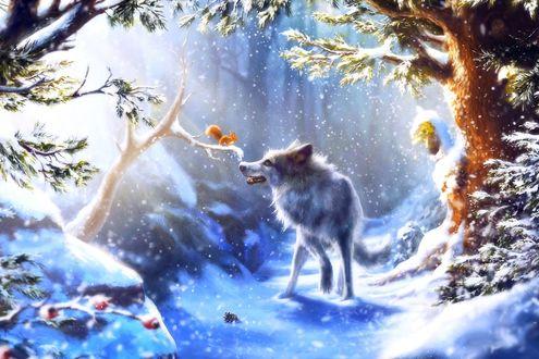 Обои Волк в зимнем лесу смотрит на белочку, сидящую на веточке