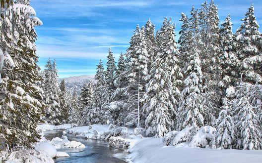 Обои Незамерзающий зимой неширокий ручей с заснеженными берегами, растущими елями на фоне гор и голубого неба с незначительной облачностью