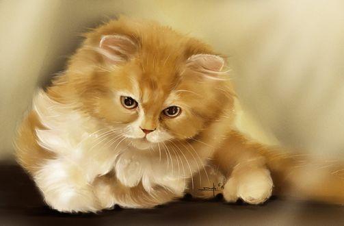 Обои Рыжий маленький котенок, by dndrew